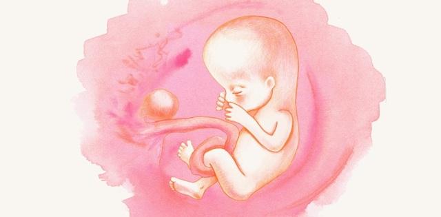 13 неделя беременности: что происходит, ощущения в животе, фото плода