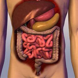 Энтерит: симптомы и лечение энтерита, диета при энтерите, лечение энтерита у взрослых народными средствами