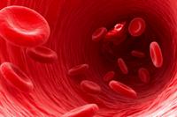 Понижены эритроциты в крови: что это значит у взрослых женщин, мужчин, причины эритропении