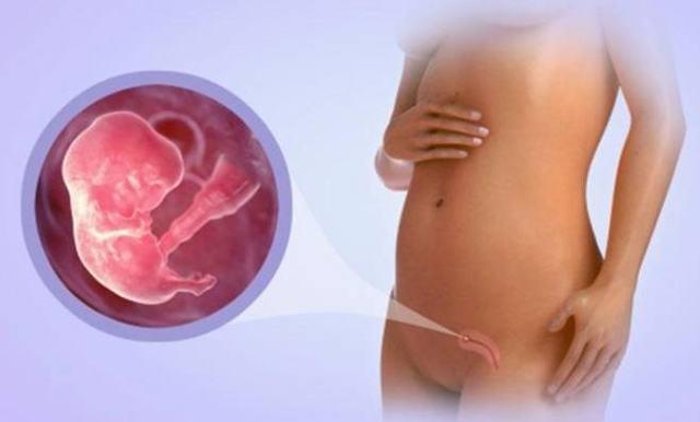 8 неделя беременности: что происходит с малышом и мамой, развитие плода, ощущения