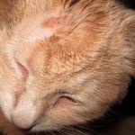 Аллергия на домашних животных: симптомы у взрослых, детей и грудничков, лечение
