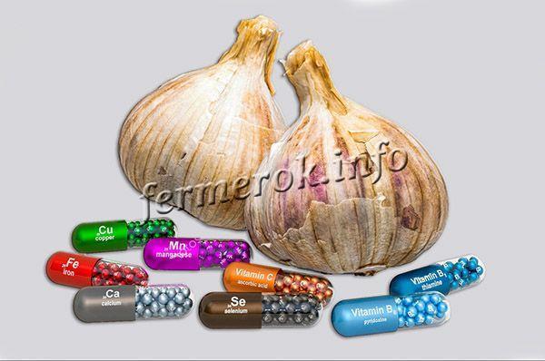 Полезные свойства чеснока, пищевая ценность, состав, применение при беременности, вред чеснока