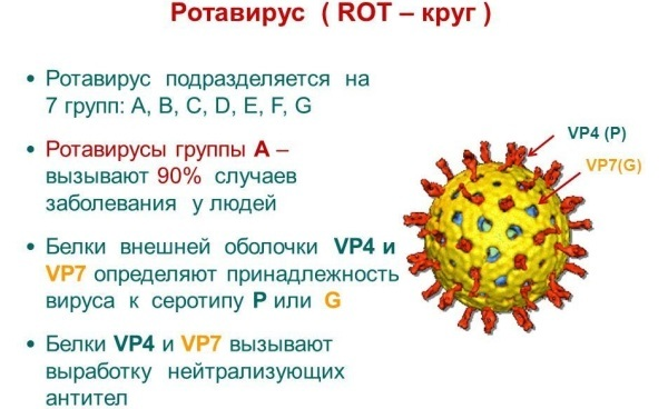 Что принимать при ротавирусной инфекции, как лечить ротавирус