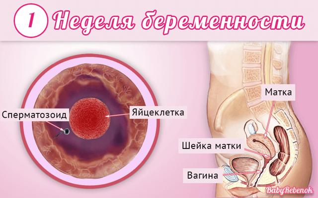 Признаки беременности на 1 неделе – ощущения, выделения, боли, ребенок на 1 неделе