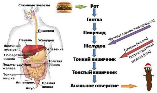 Стеаторея: что это такое, причины, симптомы, лечение, типы