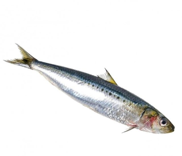 Сардина: польза и вред, пищевая ценность, состав, калорийность сардины