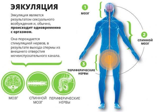Задержка эякуляции – причины, симптомы, лечение и меры профилактики