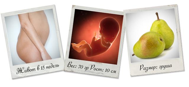 15 неделя беременности: что происходит, ощущения в животе, фото живота