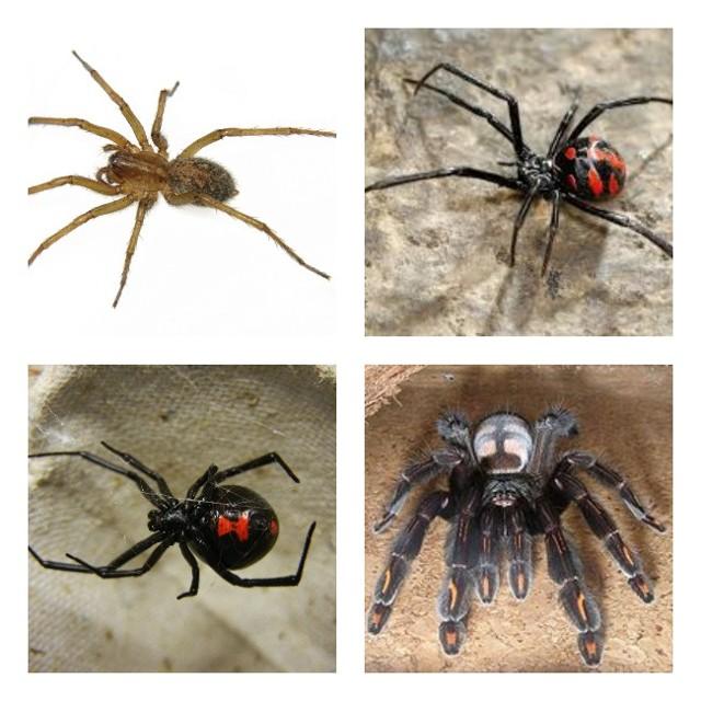 Укусы пауков, паукообразных на человеке: первая помощь