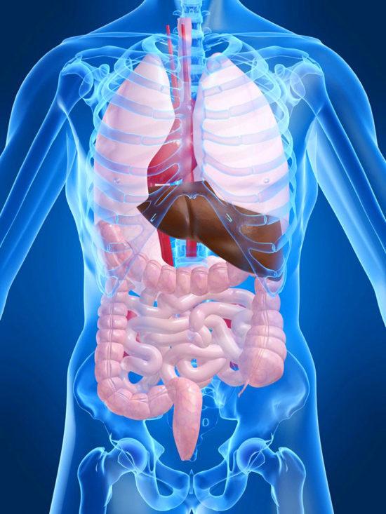 МСКТ органов брюшной полости с контрастированием: какие органы проверяют, подготовка