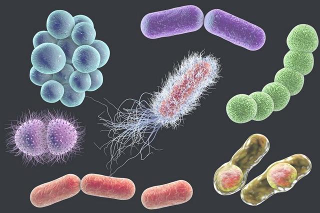Анализы на ЗППП: какие анализы сдавать на венерические заболевания, преимущества ПЦР анализов на ЗППП