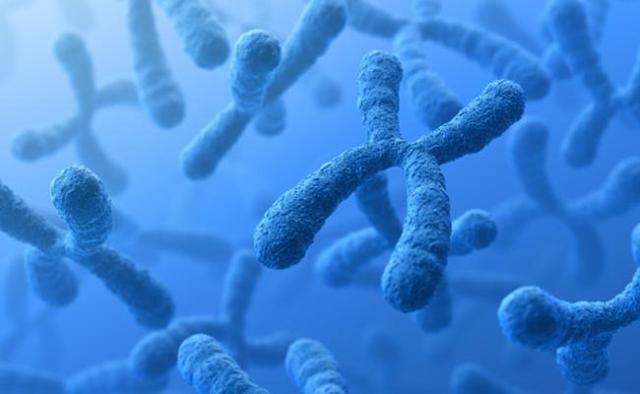 Синдром Патау: что это такое, кариотип, хромосомы, симптомы и фото больных