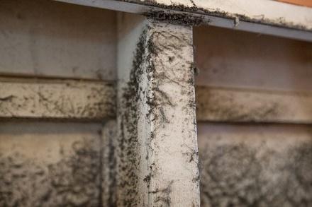 Аллергены дома: как предотвратить аллергию на пыль, на плесень, шерсть животных, краску